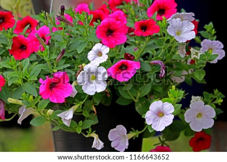 Flower plant in the pot #1166643652