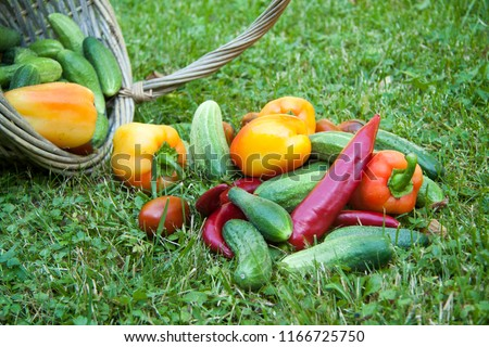 Rustic basket with organic  vegetables , tomatoes, cucumbers, paprika and red hot cilli peppers on green grass #1166725750