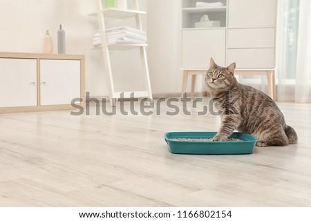 Adorable grey cat near litter box indoors. Pet care #1166802154