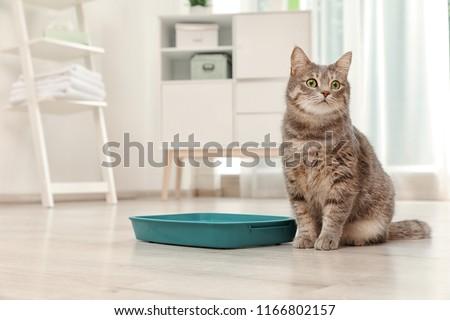 Adorable grey cat near litter box indoors. Pet care #1166802157