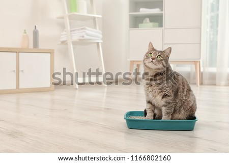 Adorable grey cat in litter box indoors. Pet care #1166802160