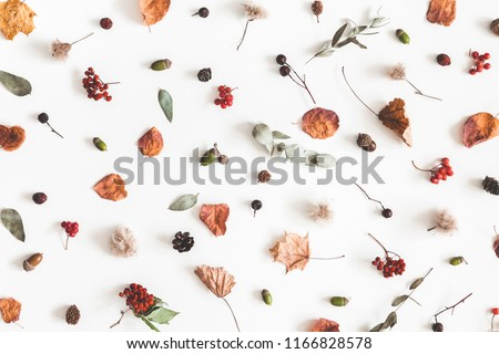 Autumn composition. Pattern made of eucalyptus branches, rose flowers, dried leaves on white background. Autumn, fall concept. Flat lay, top view #1166828578