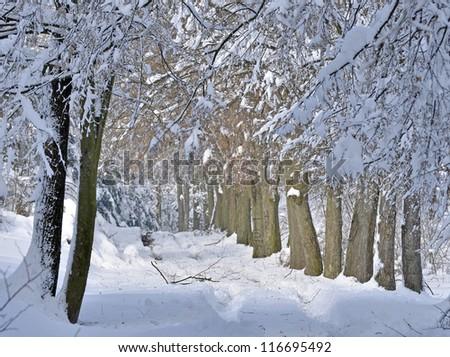 Winter scene in forest,