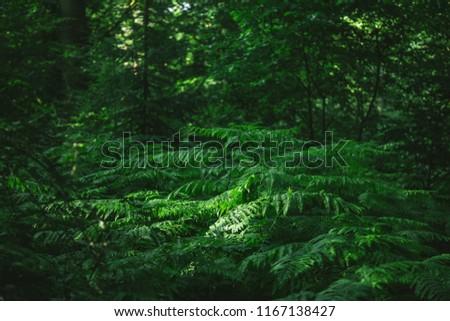 green trees in beautiful dark forest in Hamburg, Germany  #1167138427