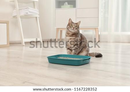 Adorable grey cat near litter box indoors. Pet care #1167228352