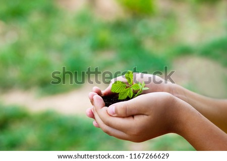 plant in hands - grass background #1167266629