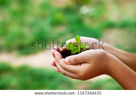plant in hands - grass background #1167266635