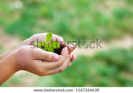 plant in hands - grass background #1167266638