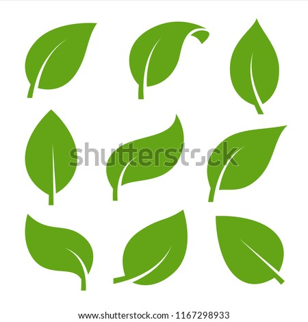 Eco green color leaf vector logo flat icon set. Isolated leaves shapes on white background. Bio plant and tree floral forest concept design. Royalty-Free Stock Photo #1167298933