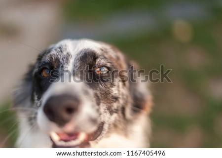 Portrait of happy dog #1167405496