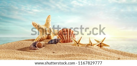 Summer photo of shells on beach and free space for your decoration  Royalty-Free Stock Photo #1167829777