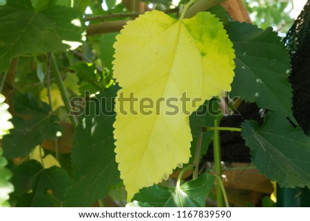 Changing Seasons. changing the life cycle of tree leaves #1167839590