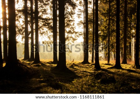 forest shadows in warm light #1168111861