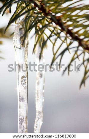 fir tree branches with icicles Royalty-Free Stock Photo #116819800