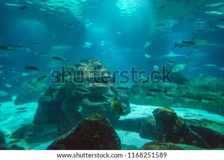 BARCELONA SPAIN - JUNE 2017: Interior of the Aquarium or L'Aquarium de Barcelona. Its the biggest mediterranean thematic aquarium, located in Port Vell housing 11,000 animals representing 450 species. #1168251589