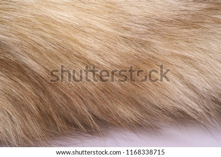 Texture background, pattern. Fox fur, Polar fox with valuable fur. gray color, and also the fur. #1168338715
