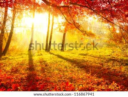 Autumn. Fall. Autumnal Park. Autumn Trees and Leaves #116867941
