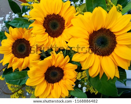 Bouquet of Sunflowers  #1168886482