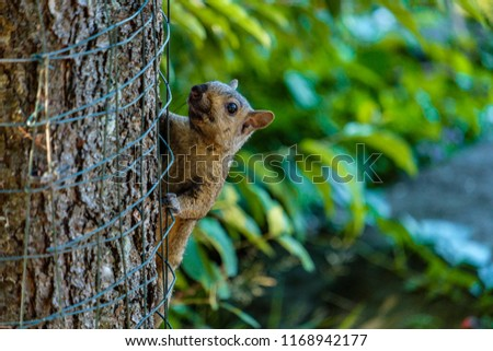 brown squirrel climbing up on wire protected tree trunk #1168942177