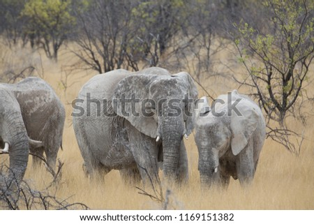 a big elephant family in africa is walking around for eating and drinking water #1169151382