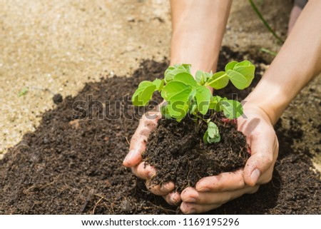 farmer hands holding a green young plant #1169195296