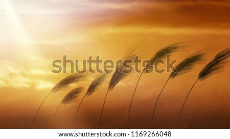blurry image,It is a symbol of light from the sun and beautiful  grass flowers. A symbol of travel to good things, happiness in life, in the atmosphere of beautiful dreams.need blur picture