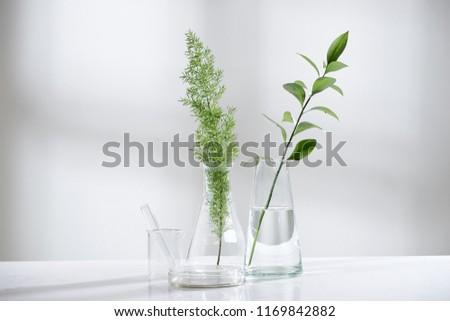 clear water in glass flask and vial with natural green leave in biotechnology science laboratory background #1169842882