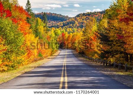 Scenic Drive through Autumn #1170264001