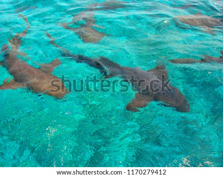 Swimming with sea animals in Hol Chan Marine Reserve, Belize Royalty-Free Stock Photo #1170279412