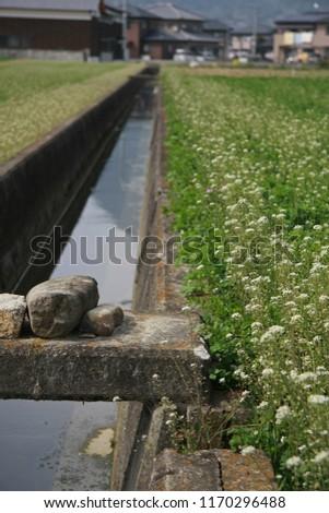 rural scene at spring season #1170296488