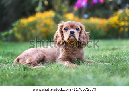 Adorable puppy lying on the green grass in the garden #1170572593