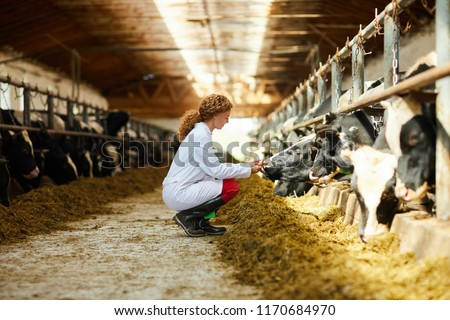 Side view portrait of cute female veterinarian caring for cows sitting down in sunlit barn, copy space #1170684970
