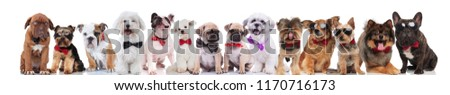 large team of cute stylish dogs of different breeds wearing bowties and sunglasses, standing, sitting and lying on white background #1170716173