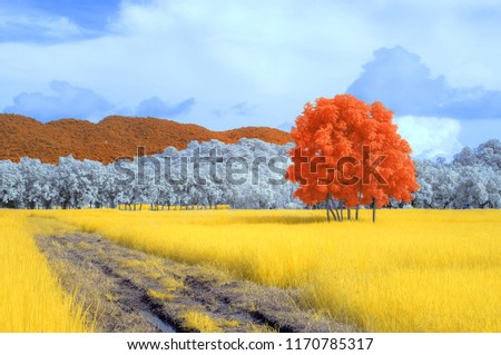 infrared colorful picture