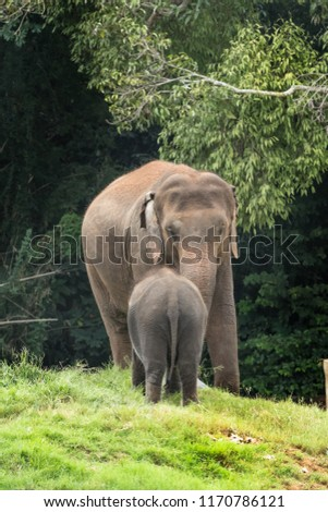 Indian elephants wandering in the Kabini forest. #1170786121