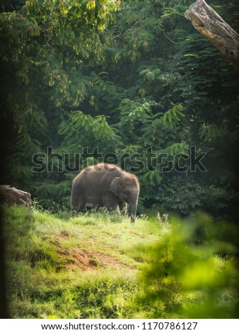 Indian elephants wandering in the Kabini forest. #1170786127