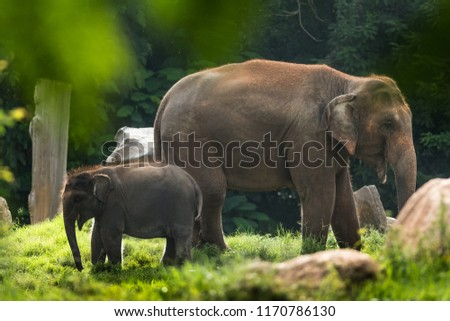 Indian elephants wandering in the Kabini forest. #1170786130