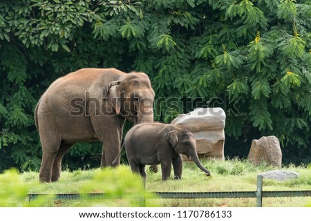 Indian elephants wandering in the Kabini forest. #1170786133