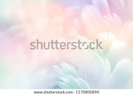 Abstract feather rainbow patchwork background. Closeup image of white fluffy feather under colorful pastel neon foggy mist. Fashion Color Trends Spring Summer 2019 - soft focus.
