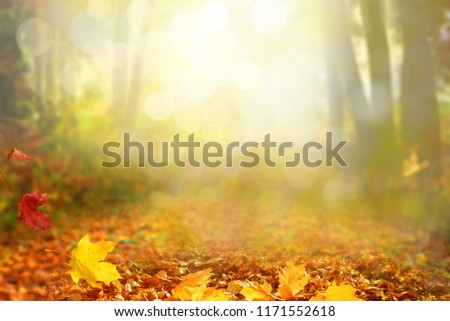 Beautiful autumn landscape with  trees and sun. Colorful foliage in the park. Falling leaves natural background #1171552618