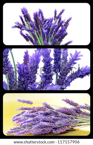a collage of three pictures of lavender
