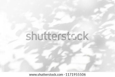Abstract gray shadow background of natural leaves tree branch falling on white wall texture for background and wallpaper, black and white monochrome tone #1171955506