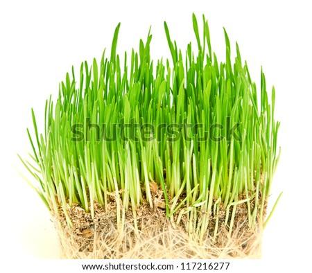green grass #117216277