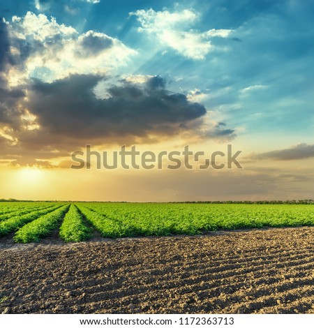 black and green agriculture fields and  orange sunset in blue sky with clouds #1172363713