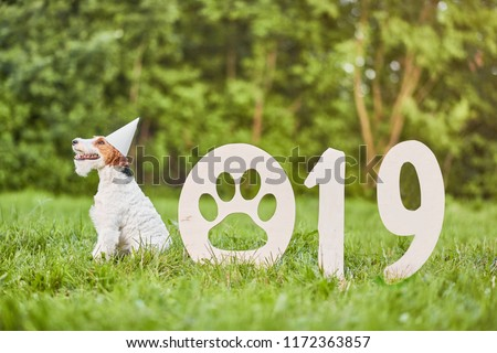 happy dog sitting in the park wearing party hat 2019 new year celebration greeting card concept.  Royalty-Free Stock Photo #1172363857