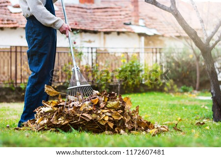 Man collecting fallen autumn leaves in the home yard Royalty-Free Stock Photo #1172607481