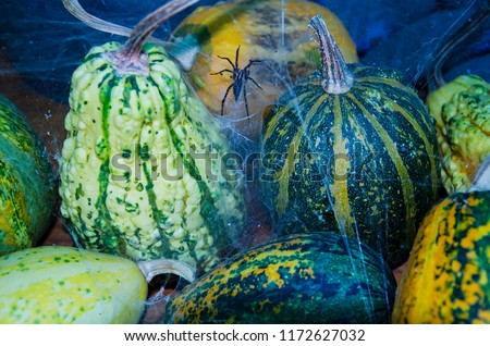 Decorative gourd in the web. Halloween. #1172627032