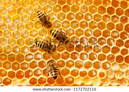 Bees on honeycomb. Royalty-Free Stock Photo #1172702116