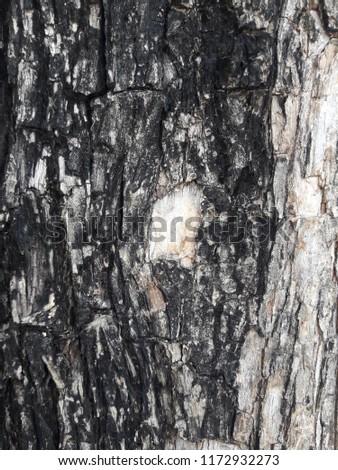 Tree wood wall texture #1172932273