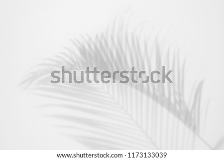 shadows palm leaves on a white wall. abstract background #1173133039